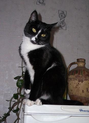 беспризорные-котята-besprizornye-kotyata-4
