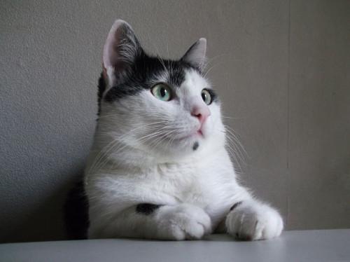 беспризорные-котята-besprizornye-kotyata-3