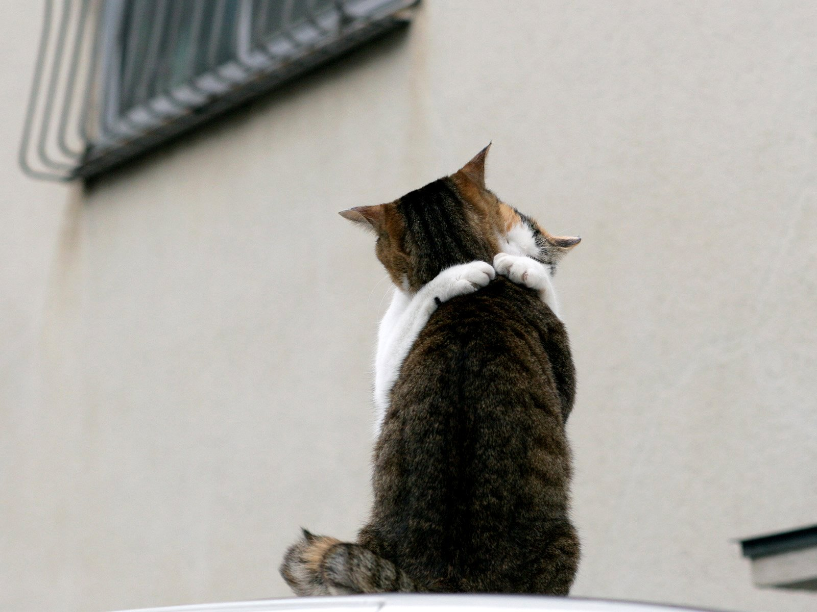 Кот обнял девушку