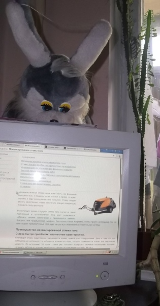 котейки-и-мониторы-kotejki-i-monitory-2